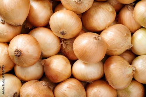 Photo  Onion background