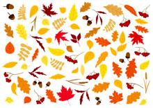 Autumn Leaves, Herbs, Berries And Acorns