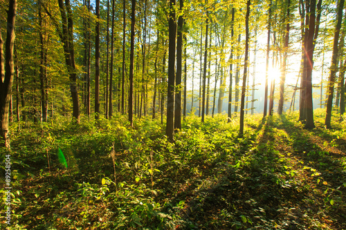 Wald Fototapete günstig kaufen | Fototapeten | Bildtapete ...