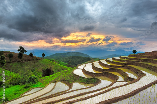 Garden Poster Rice fields Terraced Rice Field in Chiangmai, Thailand
