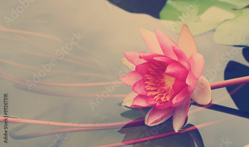 Foto  This beautiful waterlily or lotus flower with blurred vintage tone background, w