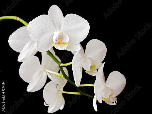 Poster Orchid Beautiful white orchid on dark background