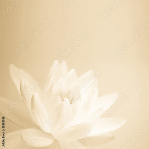 Garden Poster Lotus flower sweet color lotus in soft color and blur style on mulberry paper texture