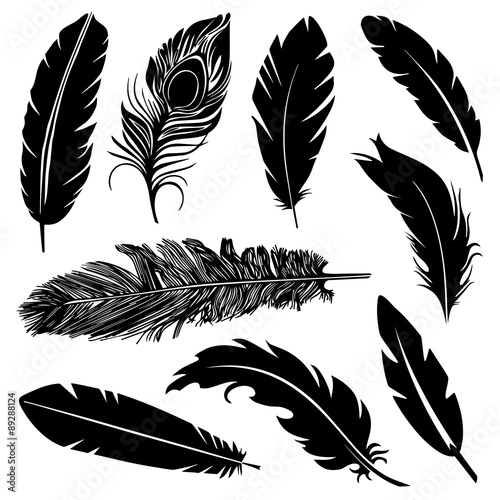 Fototapeta Feather Silhouette