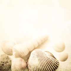 shells with sand in vintage color style