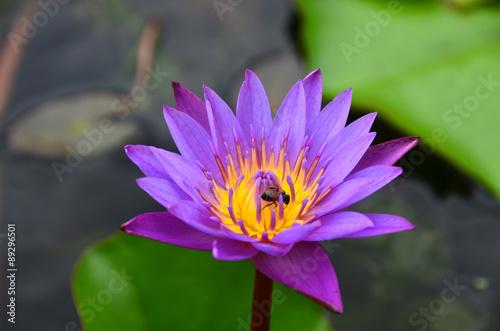 Foto op Canvas Lotusbloem lotus,flowers,beautiful,green,wall,background,water,bloom,nature