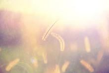 Closeup Of Rainy Golden Color ...