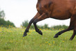 Running wild horse