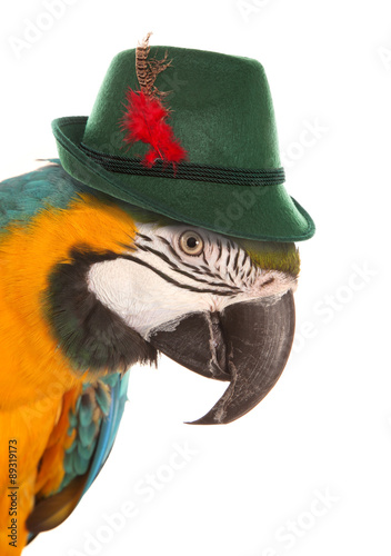 Photo macaw parrot wearing a bavarian hat