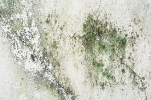 Old Concrete Wall Covered With Moss Mold