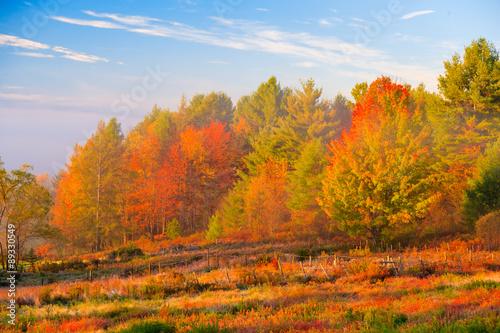 Aluminium Prints Autumn Rural country scene in the fall.