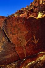 Indigenous Australian Rock Engravings In Central Australia