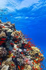 Podwodna rafa koralowa