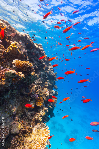 Papiers peints Recifs coralliens Underwater coral reef