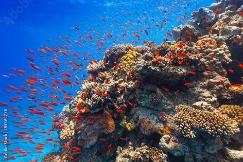 Fotobehang Koraalriffen Underwater coral reef