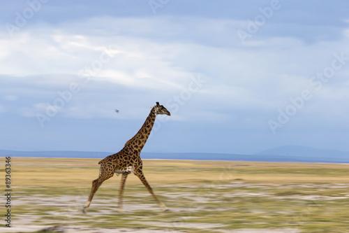 Giraffe am Rennen Poster
