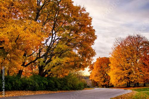 Fotografie, Obraz  Fall Road