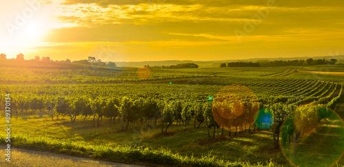 Photo sur Aluminium Vignoble Vineyard Sunrise - Landscape-Bordeaux Vineyard