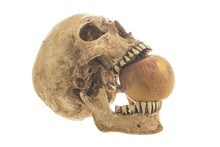 Skull And Old Apple On A White Background