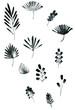 set of black watercolor floral elements