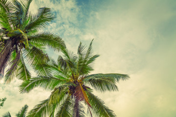 FototapetaCoconut palm trees ( Filtered image processed vintage effect. )