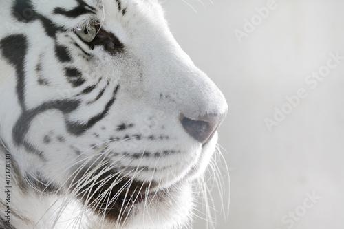 Tuinposter Tijger Porträt Weißer Tiger