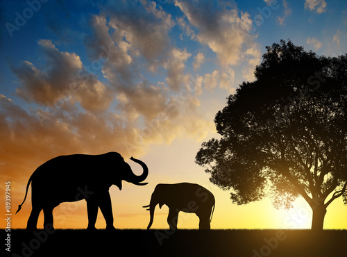 Fototapety, obrazy: Silhouette elephants in the sunset