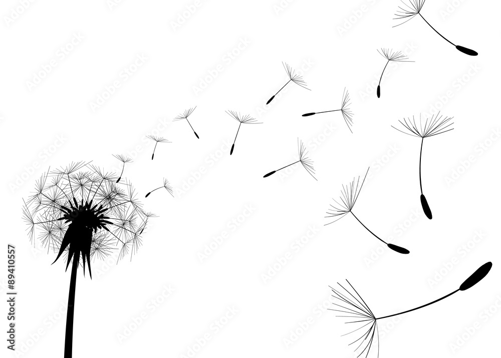 Fototapety, obrazy: Blow Dandelion on white background