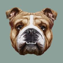 Portrait Of English Bulldog. Vector