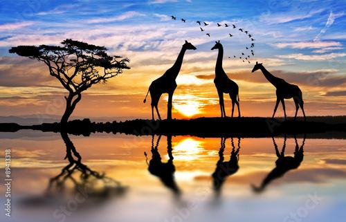 Stickers pour porte Girafe jirafas en el lago