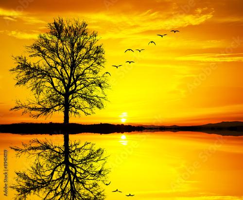 Poster Jaune el arbol del lago