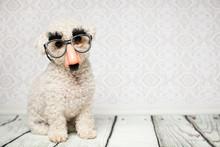 Hund Mit Nasenbrille
