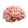 Human brain 3d illustration