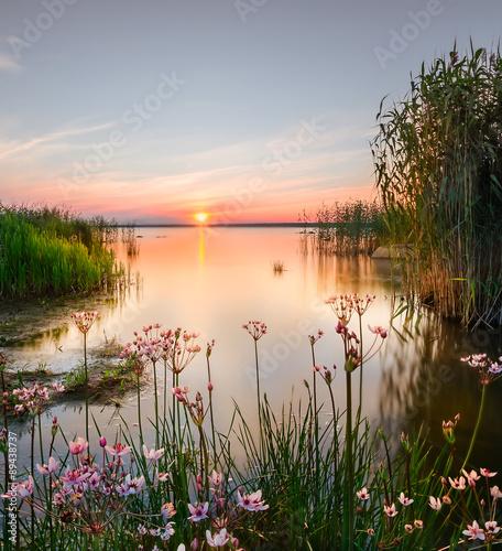Foto op Aluminium Oranje Backwater on the Chudskoy lake. lake Peipsi