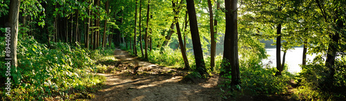 Staande foto Zwart trail in the forest