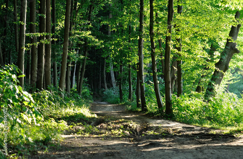 trail in the forest Wallpaper Mural