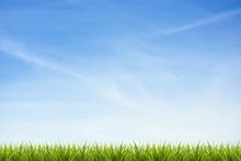 Grass Grass Under Blue Sky And...