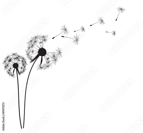 Fotografie, Obraz  Abstract Dandelion Background Vector Illustration