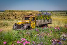 Old Truck In A Flowery Meadow
