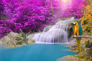 FototapetaParrot macaw against tropical Waterfall in Deep forest