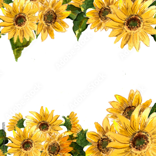 The pattern of blooming yellow flowers sunflower painted in watercolor Canvas-taulu