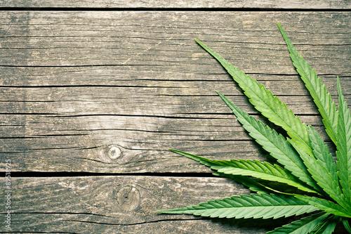 Fototapeta cannabis leaves obraz