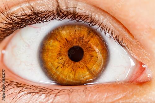 Poster Iris Human eye.