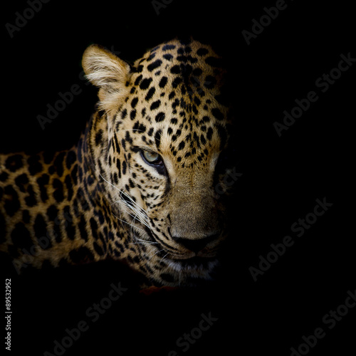 Tuinposter Luipaard Leopard portrait isolate on black background