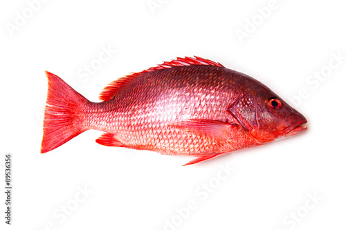Montage in der Fensternische Fisch Northern Red Snapper Lutjanus campechanusfish isolated on a white background.
