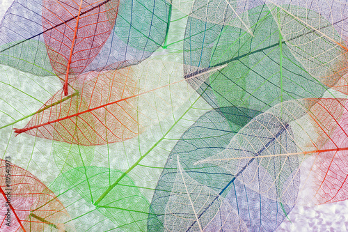 Poster Decorative skeleton leaves Abstract colorful skeleton leaves background