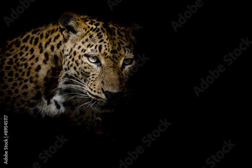 Poster Leopard Leopard portrait isolate on black background