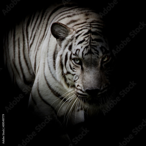 Deurstickers Luipaard White tiger isolated on black background