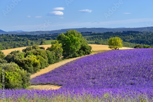 In de dag Lavendel Provence rural landscape