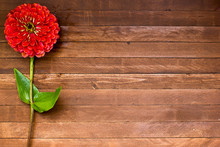 Old Boards With Zinnia Flowers Vintage Concept, Copy Space